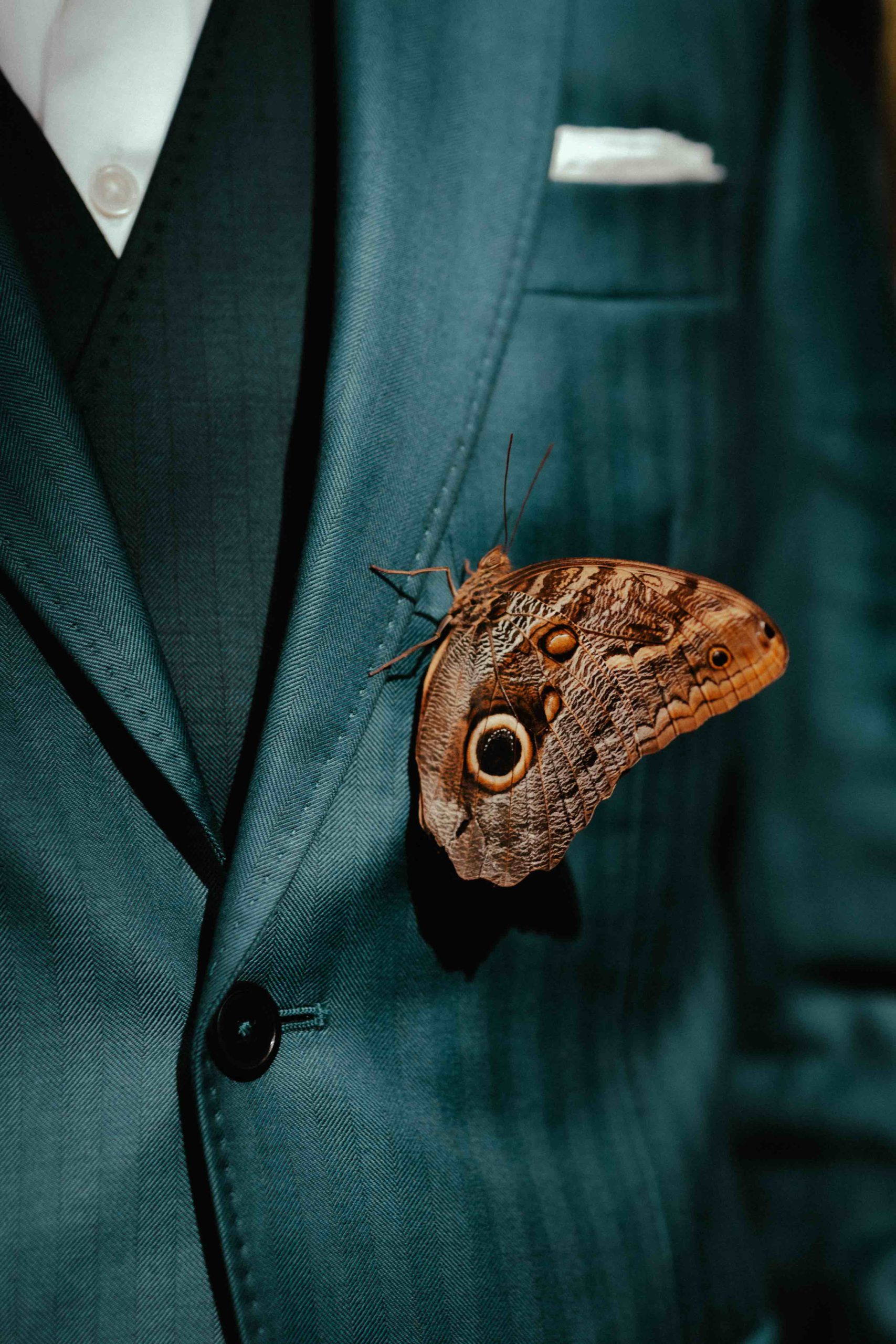 Dalbiondo buttoned jacket and double breasted waistcoat with a butterfly resting on jacket's lapel